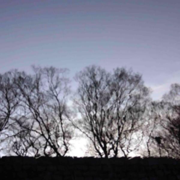Sobota z Awangardą na Transatlantyku; Tiare - wideopoezja